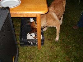 De hond doet vast de afwas...